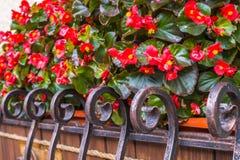De kleurrijke herfst in de stad Bloeiende de herfstbegonia's op een vensterbank Royalty-vrije Stock Afbeelding