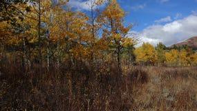 De kleurrijke Herfst in Wolf Mountains van Utah! royalty-vrije stock foto's