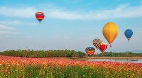 De kleurrijke hete luchtballon over kosmos bloeit gebied op hemel stock afbeeldingen