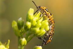 De kleurrijke insecten tonen liefde voor reproductie royalty-vrije stock fotografie