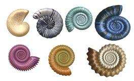 De kleurrijke Inzameling van de Zeeschelp royalty-vrije illustratie