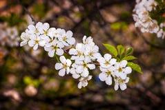 De kleurrijke lente stock fotografie
