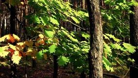 De kleurrijke lente in het hout Volledige HD stock videobeelden