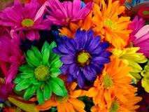 De Kleurrijke madeliefjes van de lente Stock Afbeelding