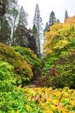 De kleurrijke mening van het de herfstlandschap bij de Botanische Tuin van Benmore, Schotland royalty-vrije stock afbeeldingen