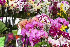 De kleurrijke orchideeën in bloempotten op bloem tonen stock fotografie