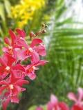 De kleurrijke purpere bloemen van de Orchidee Royalty-vrije Stock Foto