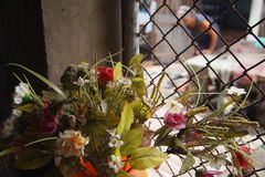 De kleurrijke purpere bloemen van de Orchidee Stock Foto's