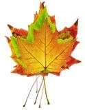 De kleurrijke stapel van esdoornbladeren Stock Foto's
