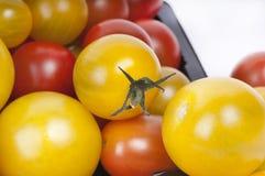 De kleurrijke Tomaten van de Kers stock foto's