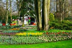 De kleurrijke tulpen van Pavillion en van de bloem komen in Nederlands park, Lisse, Holland tot bloei Stock Fotografie