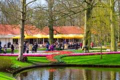 De kleurrijke tulpen van Pavillion en van de bloem komen in Nederlands park, Lisse, Holland tot bloei Stock Foto
