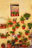 De kleurrijke voorgevel van Burgos met de potten van bloeminstallaties Stock Afbeelding
