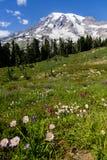 De kleurrijke wilde bloemen in alpiene weiden zetten hieronder Regenachtiger op royalty-vrije stock foto's