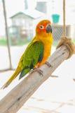 De kleurrijke zitting van de papegaaivogel op de toppositie royalty-vrije stock afbeeldingen