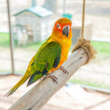 De kleurrijke zitting van de papegaaivogel op de toppositie royalty-vrije stock fotografie
