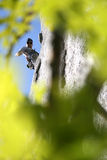 De klimmer van de rots door de bomen Royalty-vrije Stock Foto's