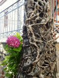 de klimop-beklede bomen en hydrangea hortensiabloem, één drogen één leven Royalty-vrije Stock Fotografie
