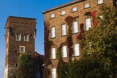 De klimop van de herfst op de muur van het gebouw Royalty-vrije Stock Fotografie
