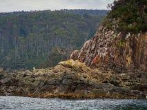 De klippengezicht en rotsen van het Brunyeiland Stock Afbeeldingen