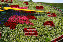 De klok van de bloem   Stock Afbeelding