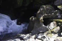 De Kloof in het Nationale Park van Fiordland Mooi Nieuw Zeeland Stock Fotografie