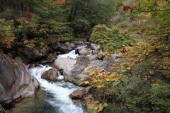 De kloven en moutain de stroom van Mitakeshosenkyo met rode de herfstbladeren Stock Fotografie