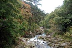 De kloven en moutain de stroom van Mitakeshosenkyo met rode de herfstbladeren Stock Afbeelding
