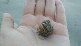 De kluizenaarkrab op het strand op hand gaat van shell weg stock footage