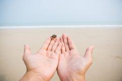 De kluizenaarkrab overhandigt strand stock fotografie