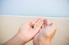 De kluizenaarkrab overhandigt strand stock foto