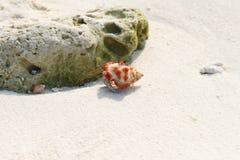 De Kluizenaarkrab van het aardbeiland op een strand, de Maldiven Royalty-vrije Stock Foto