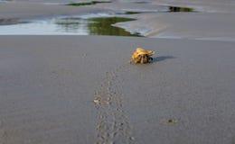 De kluizenaarkrab verlaat de voetafdrukken in het zandige strand dichtbij Se Stock Afbeeldingen