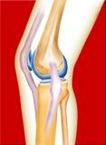De knie van het been Stock Foto's