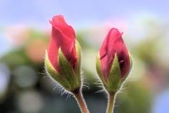De knop van de bloem royalty-vrije stock foto's