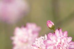 De knop van de bloem Royalty-vrije Stock Fotografie