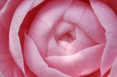 De knop van de bloem Stock Foto