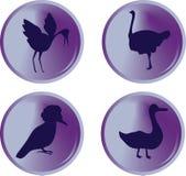 De knopen van de vogel Royalty-vrije Stock Fotografie