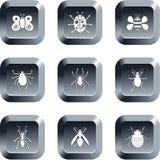 De knopen van het insect Stock Afbeelding
