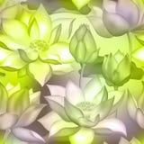 De knoppen en de bloemen naadloze achtergrond van Lotus , De aquatische installatieillustratie van Water lilly nelumbo royalty-vrije illustratie