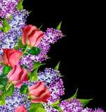 De knoppen van bloemenrozen Stock Afbeelding