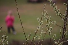 De knoppen van de boom zijn tot bloei komend Silhouet van de mens in de afstand De vroege Lente royalty-vrije stock afbeelding