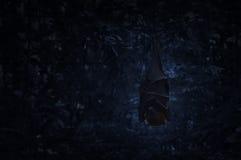 De knuppelslaap en hangt op boom op donkere bos, Griezelige achtergrond, Ha Stock Fotografie