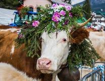 De koe is verfraaid met bloemen Stock Fotografie