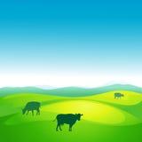 De koe weidt in een weide - vector Royalty-vrije Stock Fotografie