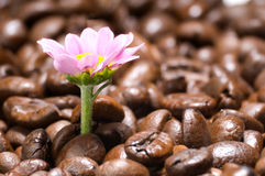 De koffie geeft vitaliteit royalty-vrije stock afbeelding