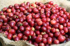 De koffie van de kersenboon royalty-vrije stock fotografie