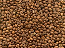 De koffie van de korrel in macro Stock Foto's