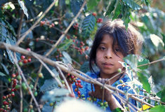 DE KOFFIE VAN LATIJNS AMERIKA GUATEMALA Royalty-vrije Stock Foto's