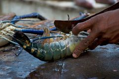 De kok snijdt de zeekreeft op de vissenmarkt stock foto
